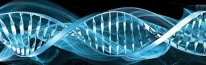 DNA a Internet Viva
